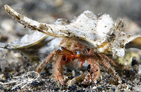 Hermit Crab by Nicholas Samaras