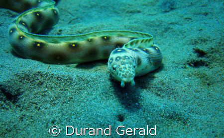 very nice serpentine by 10m in saline bay (french west in... by Durand Gerald