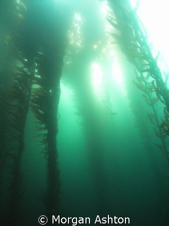 Monterey. Taken with a Sea and Sea DX-1G with wide-angle ... by Morgan Ashton