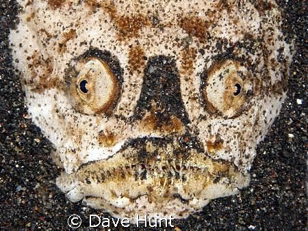I *am* smiling.    Stargazer on night dive in Lembeh St... by Dave Hunt