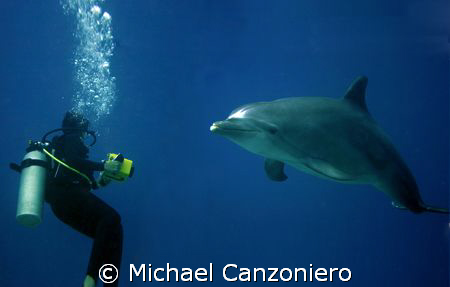Ooh! Ooh! Take my picture! Please, please! Take my pictur... by Michael Canzoniero