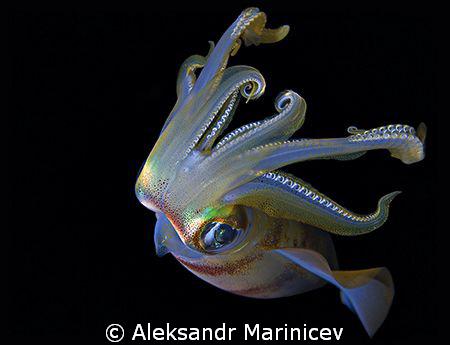 Squid attacted, night shot, Maldives by Aleksandr Marinicev