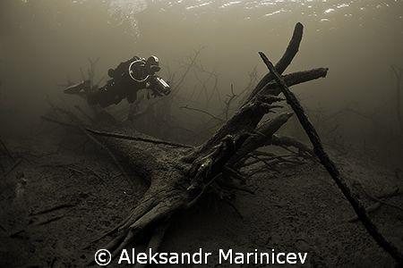 Deep Forest by Aleksandr Marinicev
