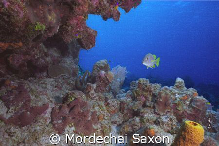 Was looking to photograph the reef when the fish came int... by Mordechai Saxon