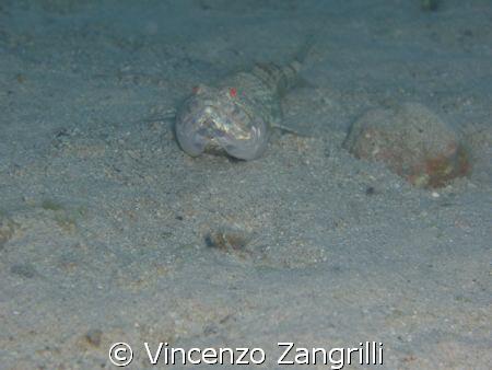 Lizard fish by Vincenzo Zangrilli