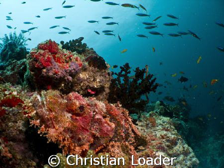 Scorpionfish with Fusiliers above. Olympus SP350, inon st... by Christian Loader