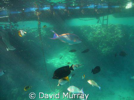 free diving on holidays by David Murray