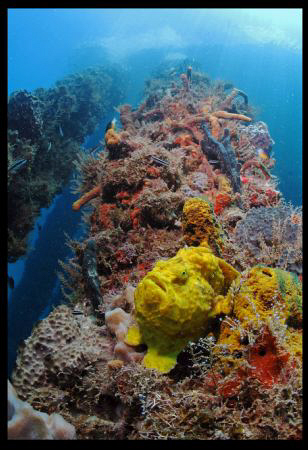Yellow Frog Fish in Crash Boat Piers.  First time I post ... by Juan Torres