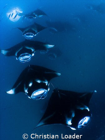 All aboard the Manta Train!!   Olympus SP350, Inon fishey... by Christian Loader