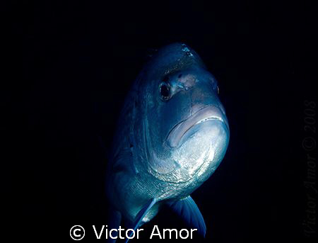 Silver ghost by Victor Amor