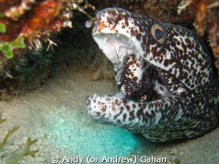 Moray in St. Martin (Dutch Antillies) Shot with a Canon I... by Andy (or Andrew) Gahan