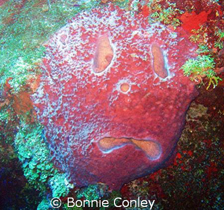 """Sponge Bob"" in Grand Cayman.  Photo taken July 2008 wit... by Bonnie Conley"