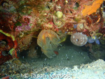 Olympus 1030 SW Worm with new comers in life by Iason Lambos