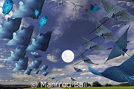 mantas and eaglerays flying in bavaria by Manfred Bail