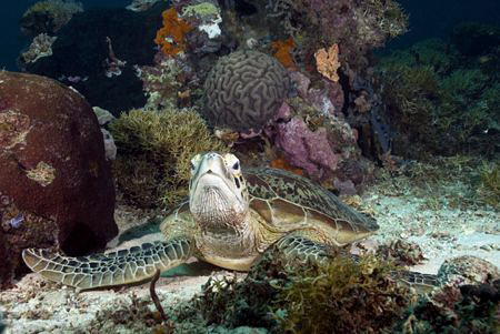 Startled turtle by Erika Antoniazzo