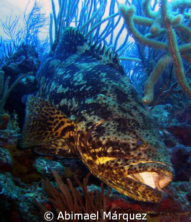 Jewfish (The Rembrandt  Technique), photo taken with an o... by Abimael M&#225;rquez 