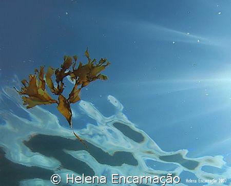 Drifting algae, shot done with compact camera Canon Power... by Helena Encarnação
