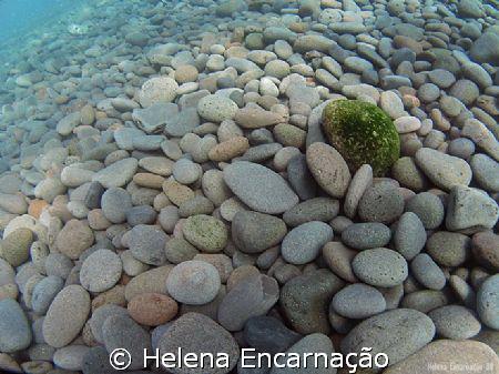 Isolated green. by Helena Encarnação