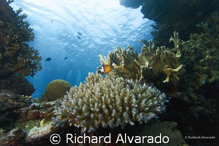 Coral growth on a wreck in Truk Lagoon by Richard Alvarado