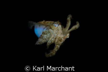 Mars Attacks.  Cuttlefish on a night dive. by Karl Marchant