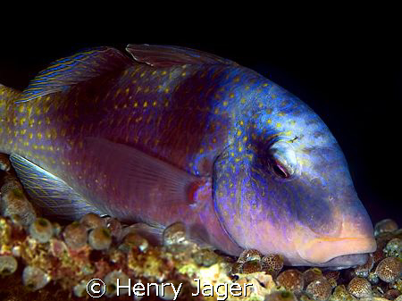 """""""Siesta""""  - This fish I've shot with a 50mm Macro lens. D... by Henry Jager"""