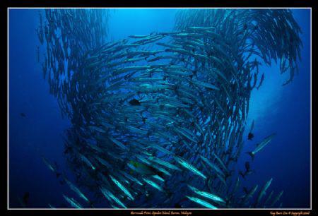 Barracuda Vortex at Sipadan Island's famous Barracuda Poi... by Kay Burn Lim