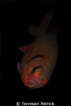 Red fish by Torresan Patrick