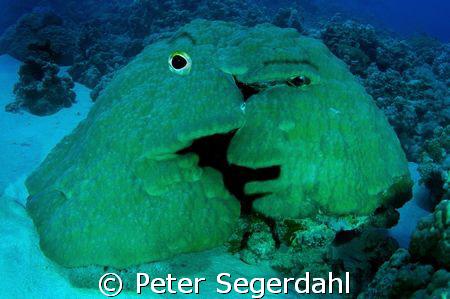 Coral Love! by Peter Segerdahl