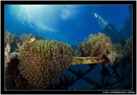 Second dive with my new Fuji S5 Pro and 10.5mm by Yves Antoniazzo