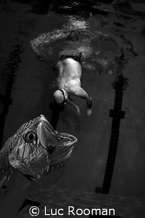 Fish attack by Luc Rooman