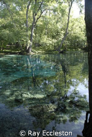 Ginnie Springs, FL. Camera Nikon D-200 by Ray Eccleston