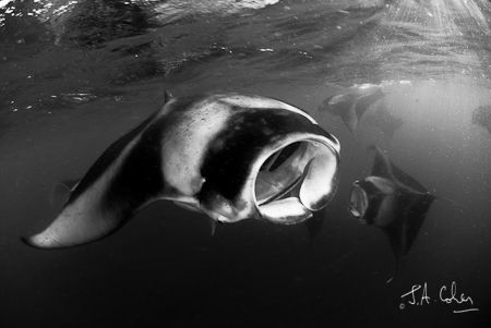 1/50 @f5.6