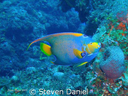 Queen Angel of the Deep by Steven Daniel