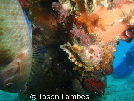 Who said that fish do not ly on their back to take a nap?... by Iason Lambos