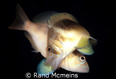 Mating Hamlets by Rand Mcmeins