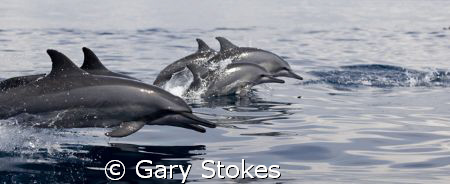 Dawn Patrol of the Spinners by Gary Stokes