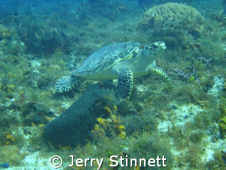 This was one of our best trips ever to Cozumel.  This was... by Jerry Stinnett