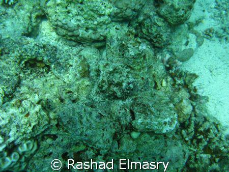 Devil ScorpionFish. I uploaded the photo without any adju... by Rashad Elmasry