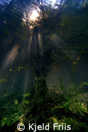 Murky Waters.   Lake diving in Elev grusgrav, Denmark.... by Kjeld Friis