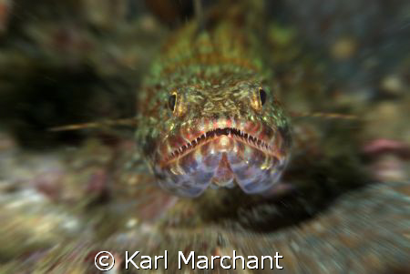 Fearsome Lizard Fish! by Karl Marchant