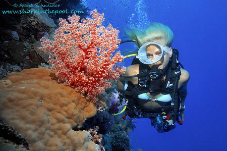 Girl with softcoral - Nikon D2Xs, Seacam-housing, Nikon Z... by Frank Schneider