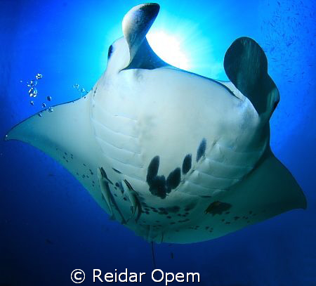 This is the view you get at manta point in raja ampat.