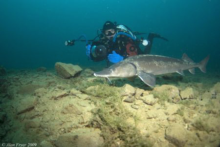 Sturgeon at Capernwray by Alan Fryer
