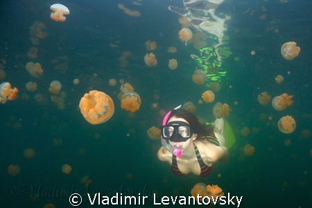 Swimming with jellies in Palau's famous jellyfish lake. by Vladimir Levantovsky