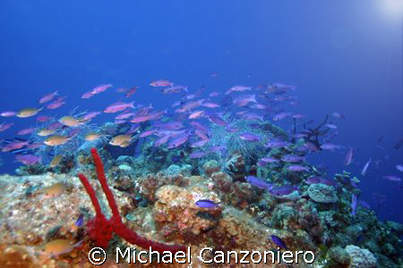 Somewhere, over the rainbow, small fish fly... by Michael Canzoniero