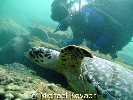 Swimming with a turtle on the Inside Reef at Lauderdale b... by Michael Kovach