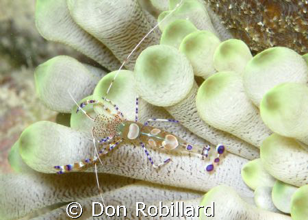 This picture was taken in Bonaire on a site called Andrea... by Don Robillard