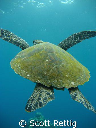 Turtle Launch ! by Scott Rettig