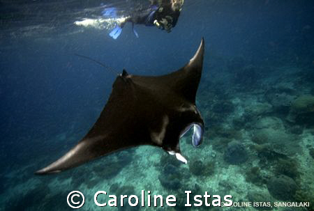 Snorkeler with Manta. by Caroline Istas