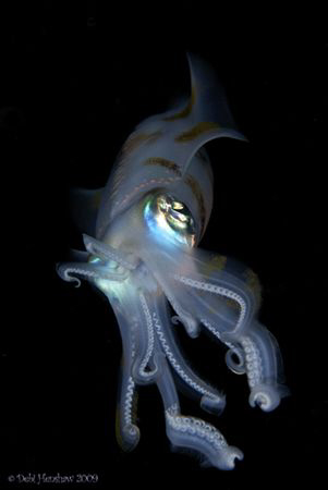 """Alien"" A Night Dive had me a wonderful encounter with th... by Debi Henshaw"
